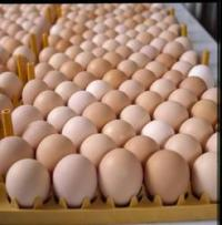 NEW White and Brown Fresh Chicken Eggs